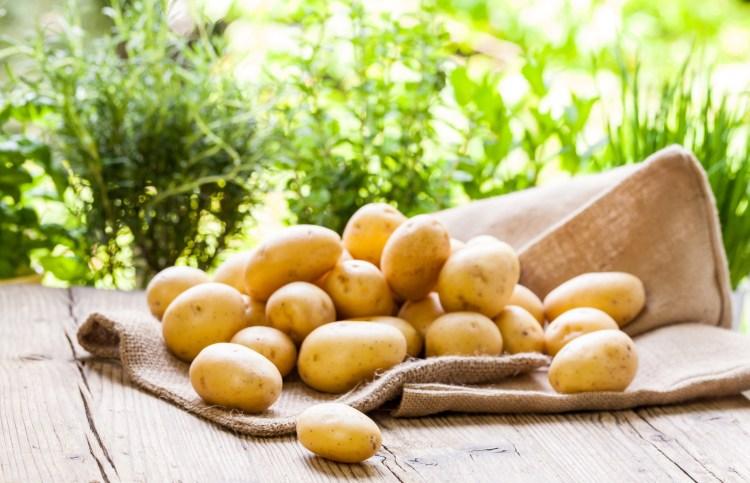 Pommes de terre primeur