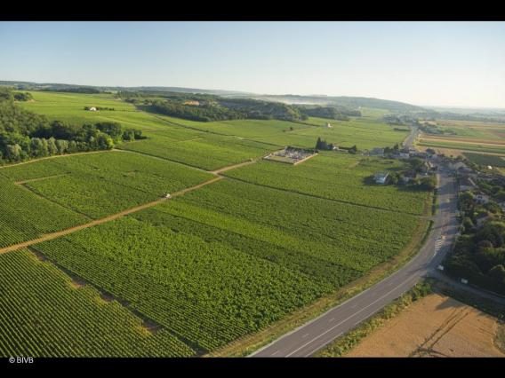 Vignoble de Cogoloin Bourgogne @ BIVB_c2i