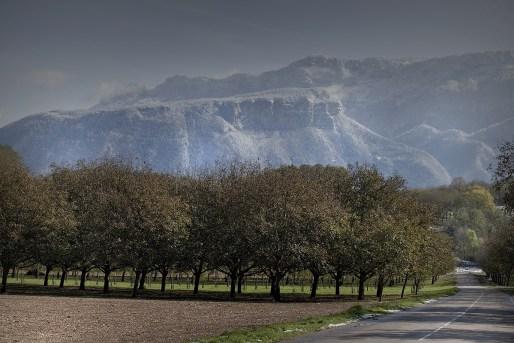 La noix de Grenoble - Culture