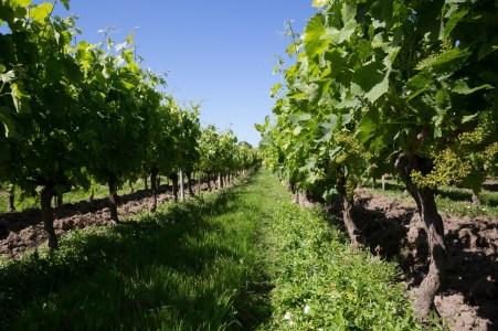 Chateau Bonnange Vignes - Terroir Evasion