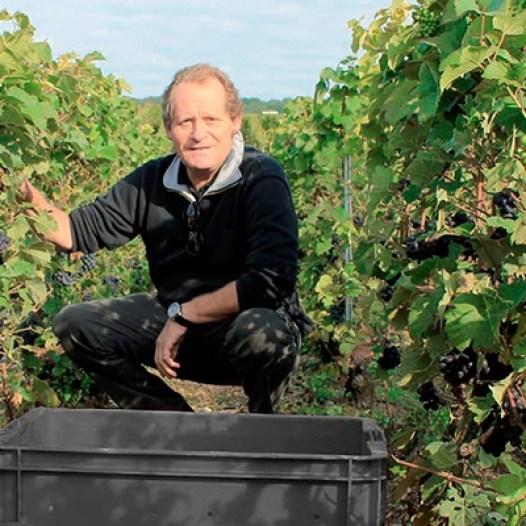 Claude Mandois vigne