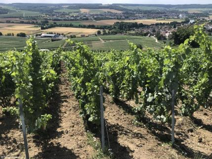 Champagne Piot Sevillano - Vignoble