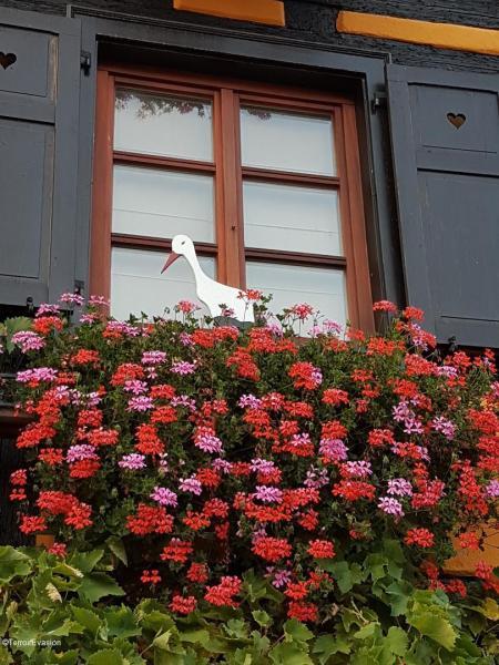 Alsace Fenêtre géranium cigogne Alsace @TerroirEvasion_c2i