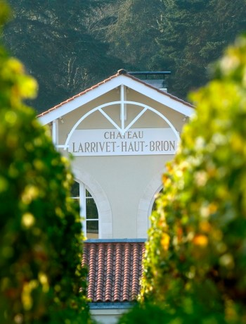 Château Larivet Haut Brion - Chai et vigne