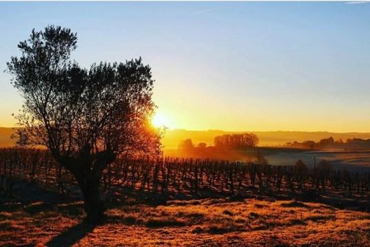 Champagne Bardiau - Coucher de soleil vignes