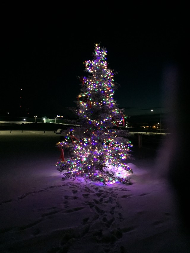 Taken at 10 AM in Inuvik on January 16. The temperature was -31 Celsius. I love that the lights are still on this tree!