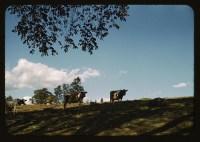 [Cowsonahillside](LOC)_id_2179175674_PD