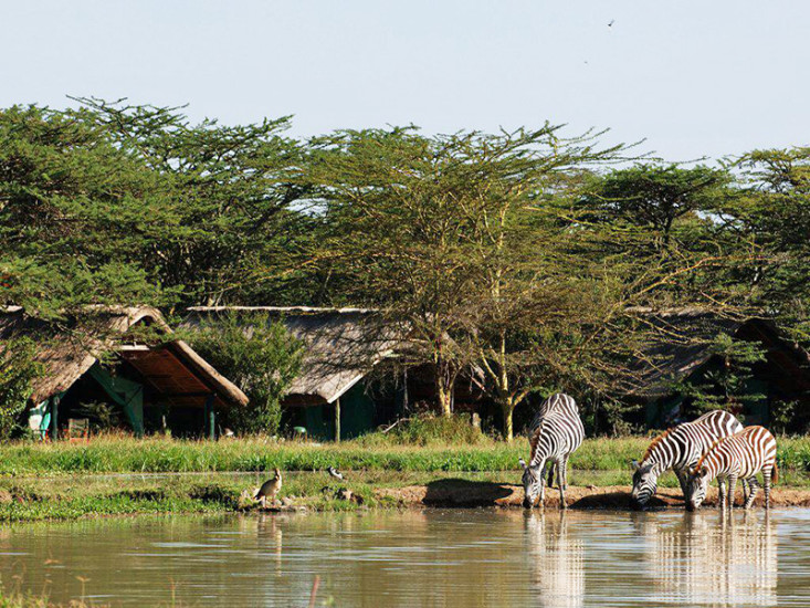 sweetwaters camp, safaris, kenya