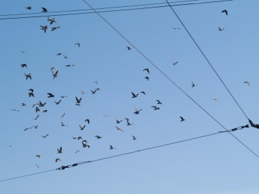 Theory of spaces and numbers, Birds on wired sky, Cluj-Napoca, Romania