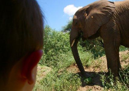 Julian spot een olifant in Manyara National Park