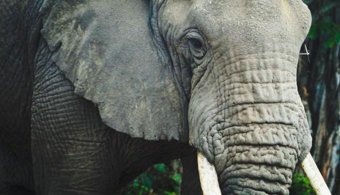 Elephant Kenya Ivory burning