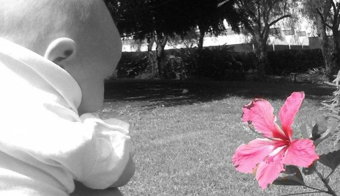 Lisan met tropische bloem in de tuin