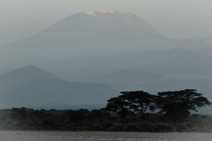Olifanten voor de Kilimanjaro Tanzania