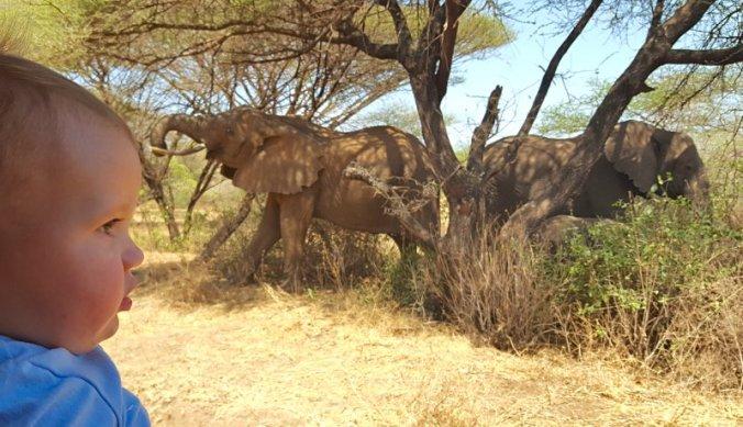 Lisan bij de olifanten in Lake Manyara
