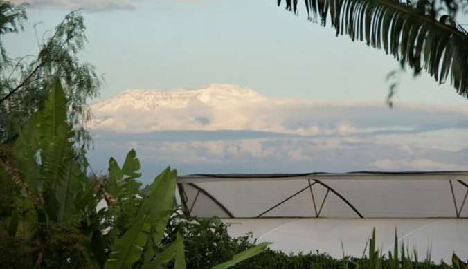 Uitzicht op de besneeuwde Kilimanjaro