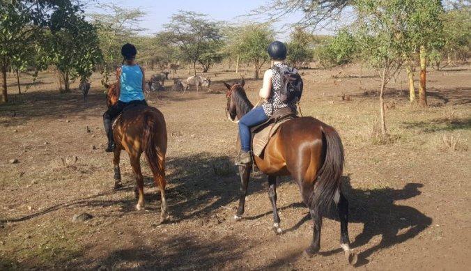 Tanzania te paard - we naderen de gnoes