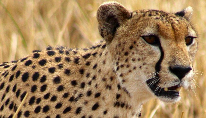 De zoektocht naar de leeuwen van Tarangire – deel II