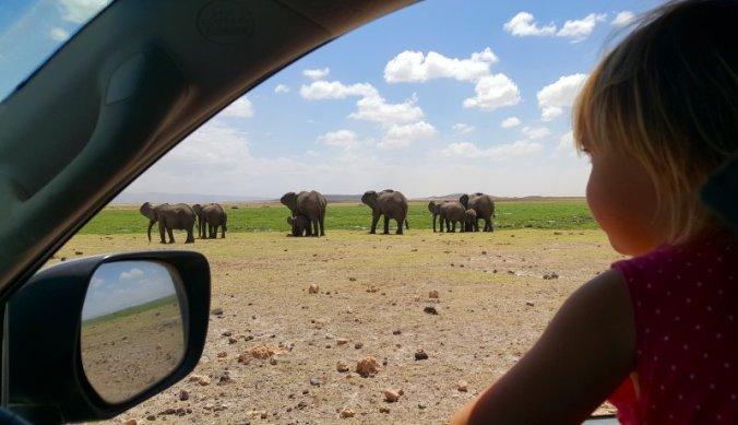 Olifanten kijken in Amboseli National Park