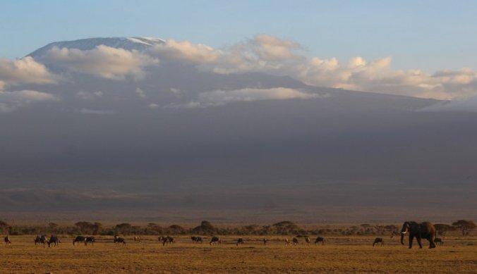 Wild leven aan de voet van de Kilimanjaro in Amboseli
