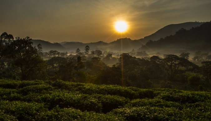 Zonsopgang in Bwindi Forest National Park