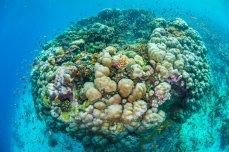 kleurrijk-koraal-indische-oceaan-onderwaterkamer
