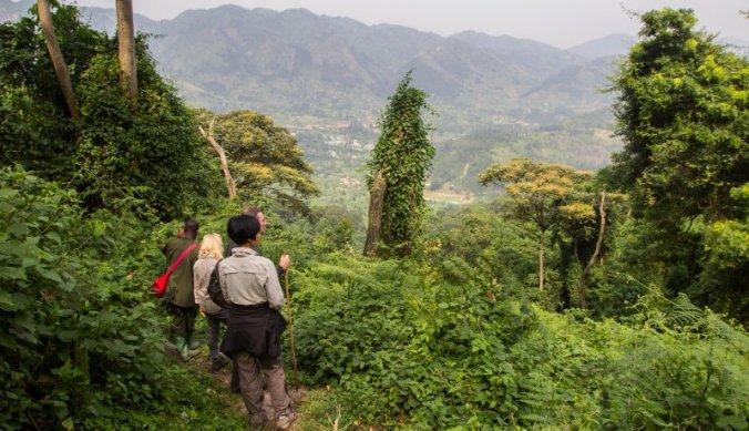 Gorilla tracking door Bwindi Impenetrable Forest Uganda
