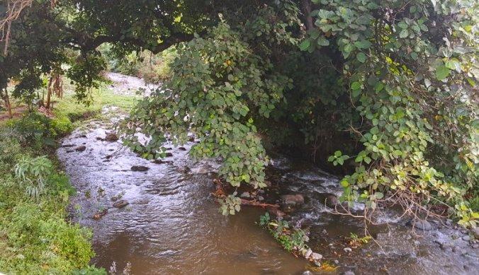 Ongerepte tropische natuur bij bruggetje in Arusha