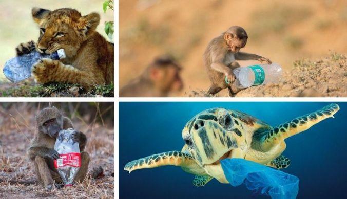 Wilde dieren met plastic afval