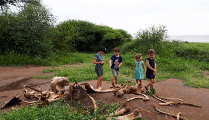 Picknickplek in Lake Manyara met botten van wilde dieren