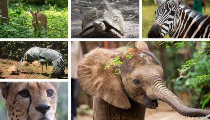 Wildlife dierenpvangcentrum Kilimanjaro