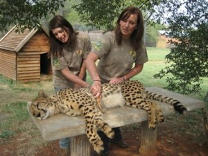 Cheetah-Voluntourism-Project-3
