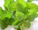 Manfaat daun mint
