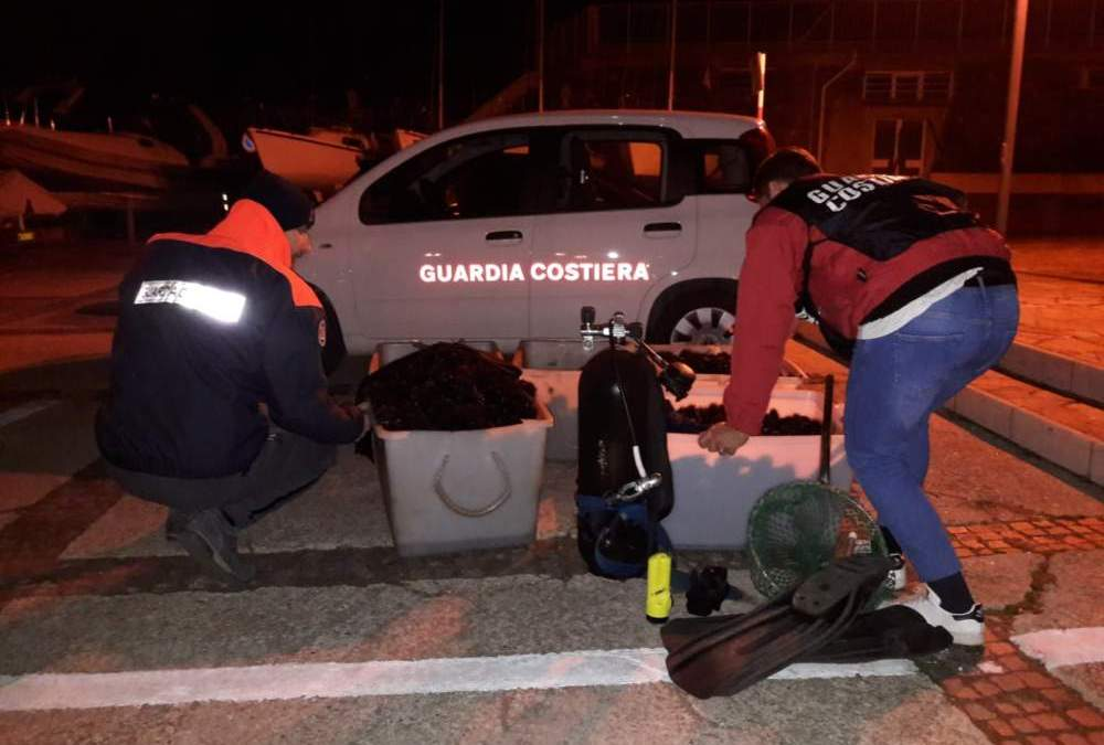 Guardia Costiera all'opera: sequestrati 7.500 ricci a Santa Marinella