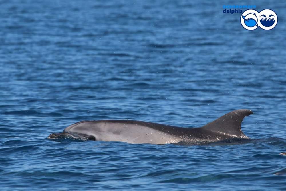 Secche di Tor Paterno, avvistati delfini tra cui un cucciolo