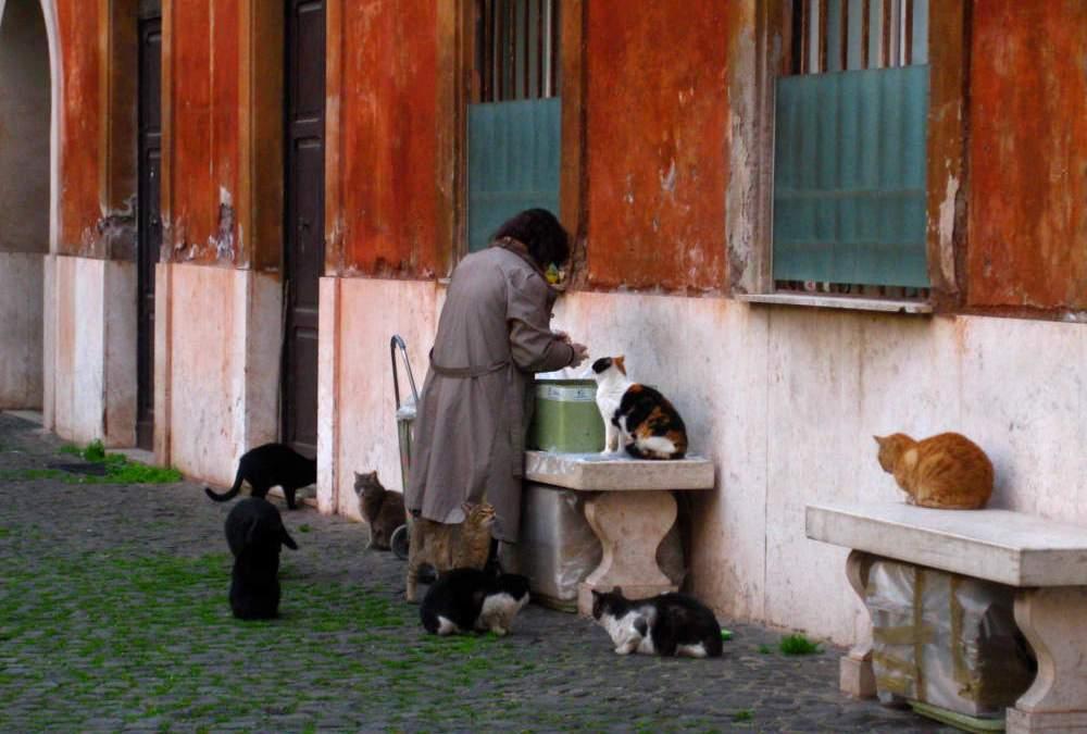 Si vuole trasferire con i suoi 23 gatti a Santa Severa: interviene il Nogez