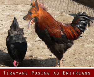 TPLF increasingly paranoid. Recent explosion of obnoxious Tigrayans trolls posing as Eritreans and write nonsense on the social media about Eritrean people and government