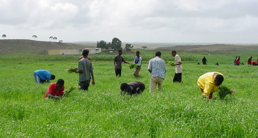 Eritrea Looking Beyond Seasonal Harvest Despite Horn of Africa Famine