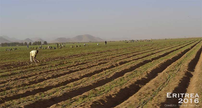 Eritrea: Status of the 2016 Harvest