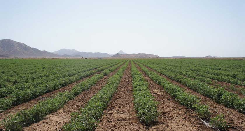 Agro-industrial farming in Gash-Barka regions of Eritrea
