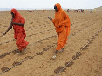 Irrigation based agriculture