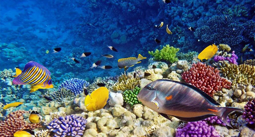 The marine bio-diversity in the Red Sea: over 1000 different species of fish and 250 types of corals