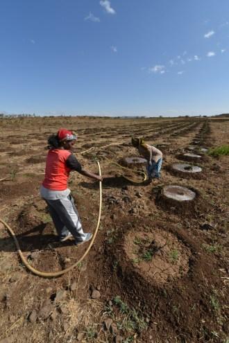 Solar pumps are used to irrigate farms Eritrea