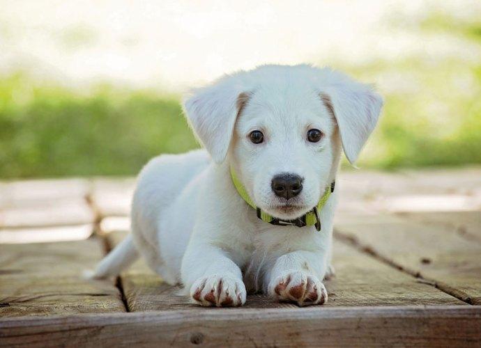 Cane-Puppy-copertina