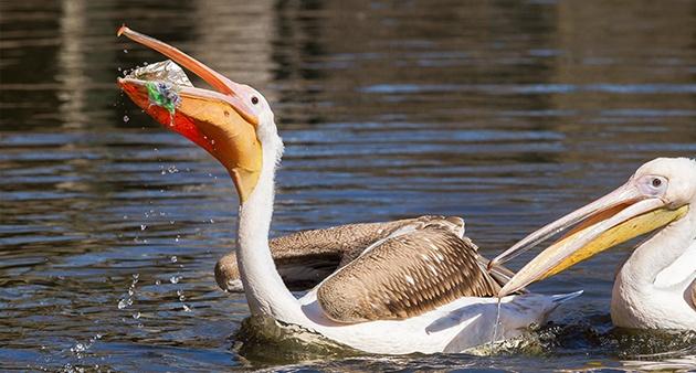 Bird devouring plastic wastes