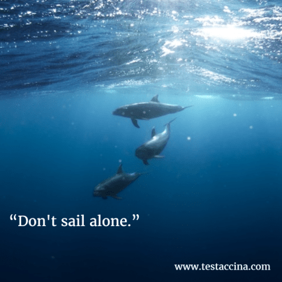 dolphins dont sail alone