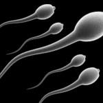 Alternativa à vasectomia, gel contraceptivo masculino é aprovado em testes com macacos
