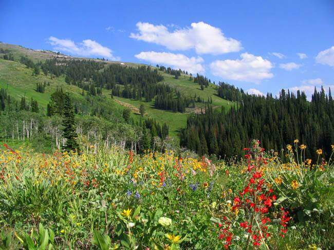 grand-targhee-ricks-basin-trails