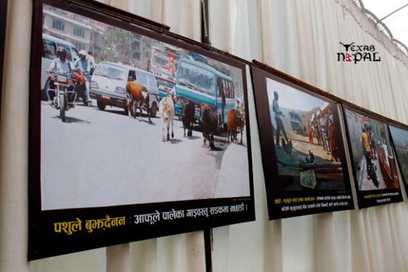 nepal-traffic-police-photo-exhibition-ratna-park-20120513-5