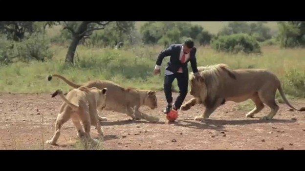 Playing Football With Wild Lions!