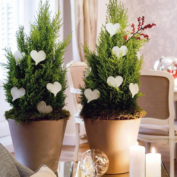 Δημιουργική εσωτερική διακόσμηση με φυτά για τα Χριστούγεννα και το Νέο Έτος